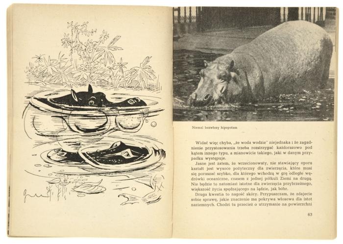 Jak powstała trąba słonia