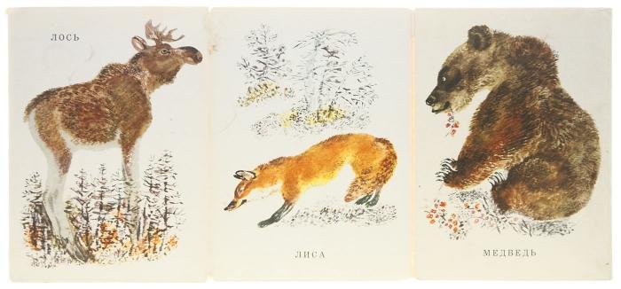 Zwierzęta naszych lasów